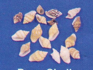 Dove Shell