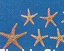 Florida Starfish