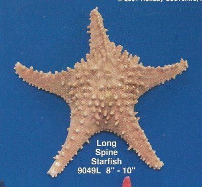 Long Spine Starfish