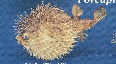 Porcupine Blowfish