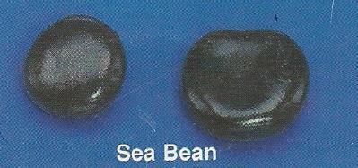 Sea Bean