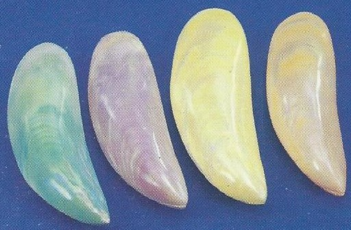 Dyed Banana Clam Pair