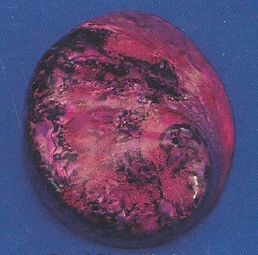 Dyed Pink Abalone