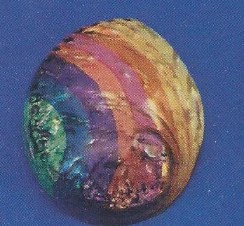 Rainbow Abalone Dyed
