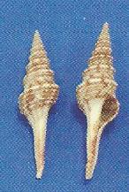 Turris Shell
